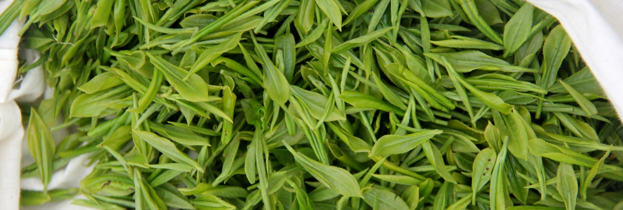 LongJing Green Tea. Fresh leaves just picked from the mountains of Zhejiang