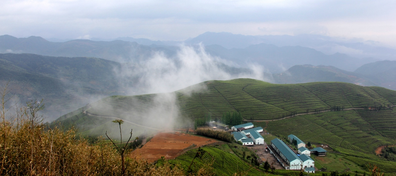 Zhejiang Tea Plantation. China Tea Facts.
