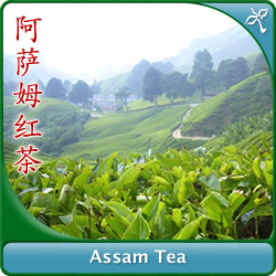 Assam Tea - Wan Ling Tea House - We sell to the UK, US
